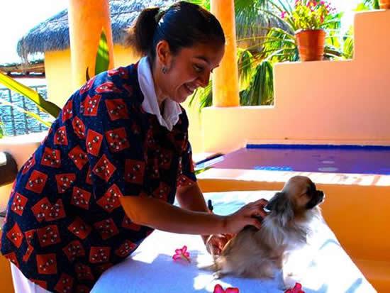 spa салон для собак и других домашних питомцев